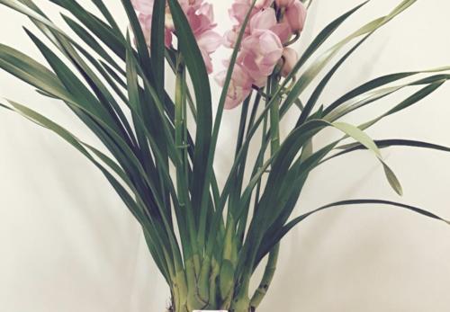 患者様よりいただいたお花